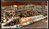 Dezastru de proportii apocaliptice in judetul Neamt! Padurile se taie acolo cu mult peste puterea de regenerare a naturii