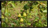 Cum alegem corect fructele si legumele sanatoase