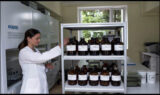 Sistemul de siguranță alimentară din Republica Moldova devine mai performant