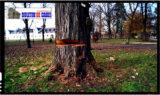 Bataie de joc la Carei! Parcul dendrologic, monument istoric de secol XVIII, luat cu asalt de drujbe in cadrul unor taieri nejustificate, abuzive si ilegale!