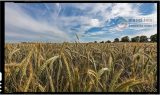 Statele post-sovietice merg pe calea îmbunătățirii comerțului agroalimentar