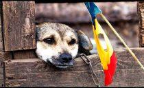 România și sindromul câinelui scăpat din lanț: lovitură de stat sângeroasă, mascată în