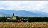 Experții examinează modalitățile de reducere a risipei alimentare în cadrul proceselor de recoltare și post-recoltare