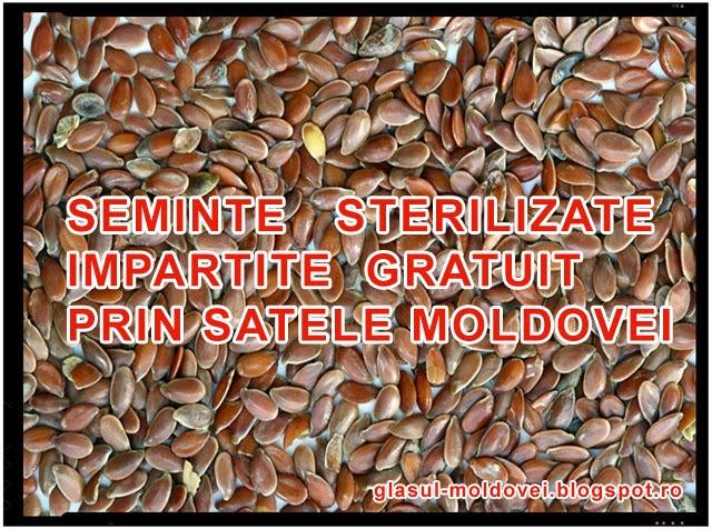 Pericol! Seminte sterilizate impartite gratuit prin satele Moldovei