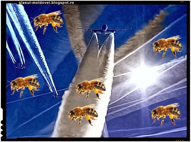 Ipoteza halucinanta - Fenomenul Chemtrails folosit pentru a ucide albinele