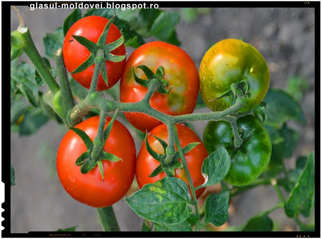 Seminte libere - grupul care faciliteaza procurarea de seminte de soiuri taranesti
