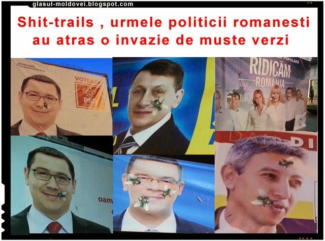 Shit-trails, urmele politicii romanesti au atras o invazie de muste verzi