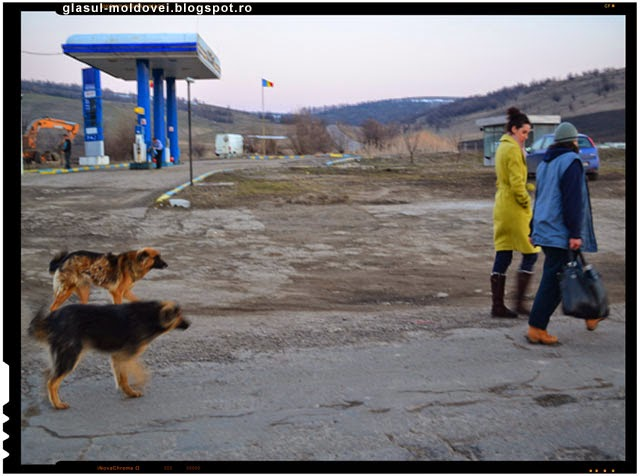Un student tunisian a fost sfasiat de caini la Iasi!