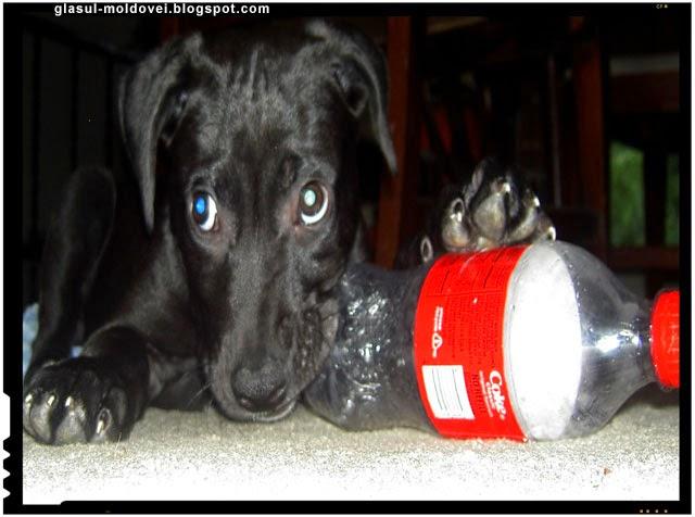 S-a confirmat, Coca Cola contine un element periculos cancerigen