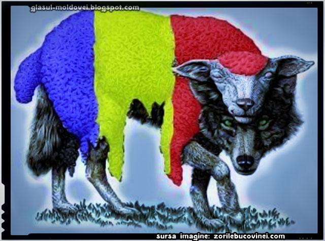 Herţa atacată de lupi în piele de oaie, sursa imagine: zorilebucovinei.com