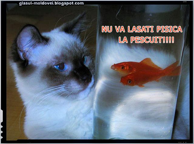 Nu va lasati pisica la pescuit!