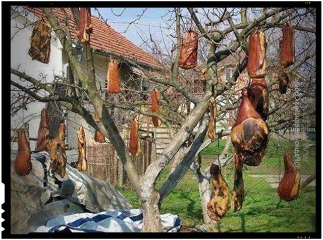 Am gasit solutia care ne scapa de invadatorii islamici! Romani, urcati godacii si proviziile de iarna prin copaci sau pe direct pe gardurile de la frontiera Romaniei!