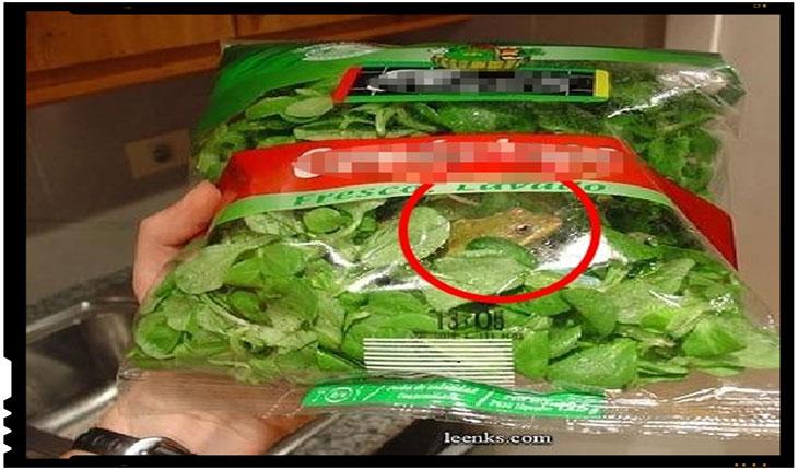 "Italia - Salata la punga dintr-un supermarket are ""garantat"" si o broasca proaspata, foto: panorana.it"