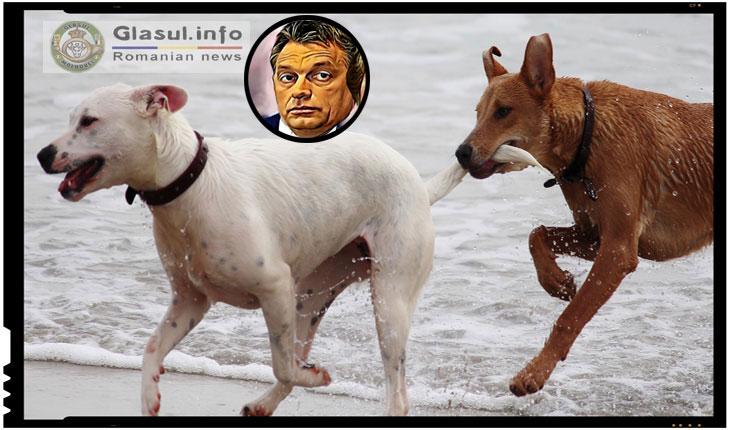 """Partidul """"Cainele cu doua cozi"""", cel mai mare dusman al lui Viktor Orban din Ungaria"""