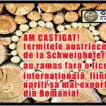 AM CASTIGAT! Termitele austriece de la Schweighofer au ramas fara o licenta internațională, fiind acum opriti sa mai exporte lemn din Romania!