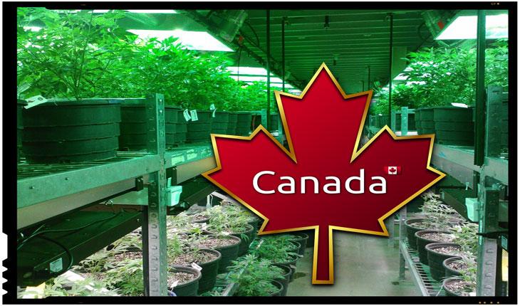 Progresismul distructiv: Canada legalizeaza consumul de marijuana