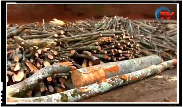 Dezastru de proportii apocaliptice in judetul Neamt! Padurile se taie acolo cu mult peste puterea de regenerare a naturii, Foto: Neamt Tv