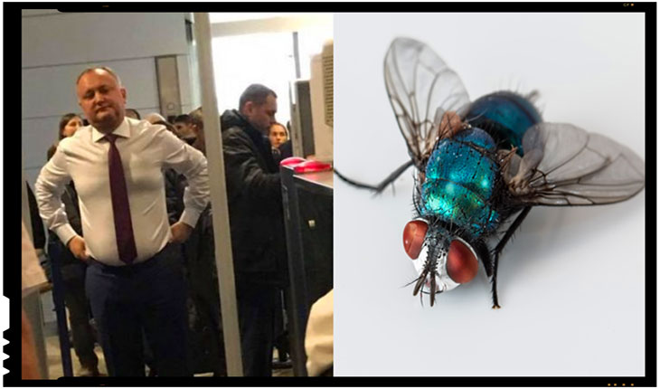 Dodon este aplaudat in Rusia precum musca verde care viziteaza bucataria