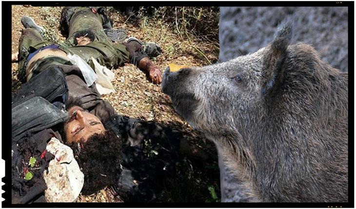 Jihadisti ISIS VS Porci mistreti: Daca nu-i mancati voi pe ei, atunci va mananca ei pe voi!
