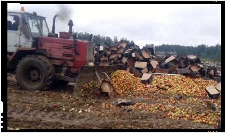 In timp ce Dodon le da dovezi de pupincurism rusilor din Transnistria, merele din Republica Moldova sunt distruse in regiunea Smolensk din Rusia, Foto: fsvps.ru