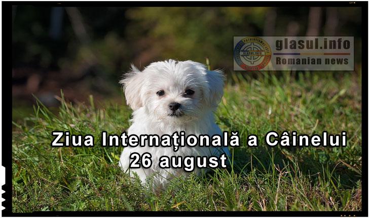 26 august - Ziua Internațională a Câinelui