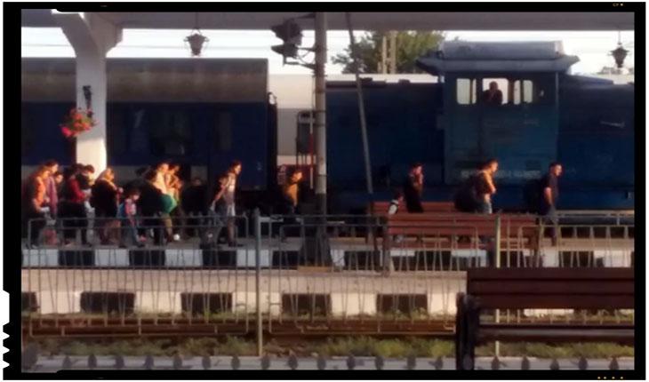 Chiar este România sat fara caini? Un roman care a anuntat prezenta unor imigranti ilegali a fost amenintat cu amenda de catre un politist, Foto: facebook.com/stefan.cojocnean