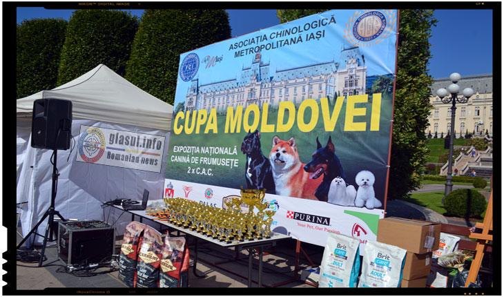 Unii dintre cei mai frumosi caini au putut fi admirati la Cupa MOLDOVEI 2017 de la IASI, Foto: Fandel Mihai