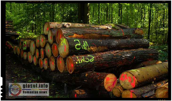 Stop tăierilor ilegale – un prim aviz favorabil pentru protejarea parcurilor naţionale