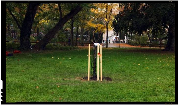Un puiet din Teiul lui Eminescu a fost plantat la Viena