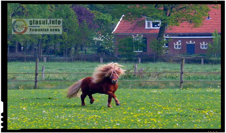 Refugiat sirian surprins in timp ce abuza sexual un ponei dintr-o gradina zoologica din Germania?