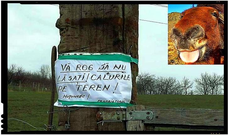 """La Satu Mare se organizeaza Paştile numai pentru """"calurile"""" altora?, Foto: Facebook / Să apărăm limba română"""