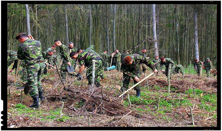 Militarii din Iaşi au plantat 1.700 de puieţi de stejar şi gorun la Dobrovăţ intr-o acţiune de împădurire organizată, Foto: Lucien Covalciuc