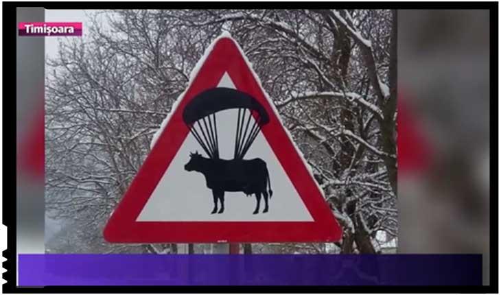 Cum ajung boii în fruntea statului? Misterul a fost elucidat, Foto: Digi 24 / Timisoara