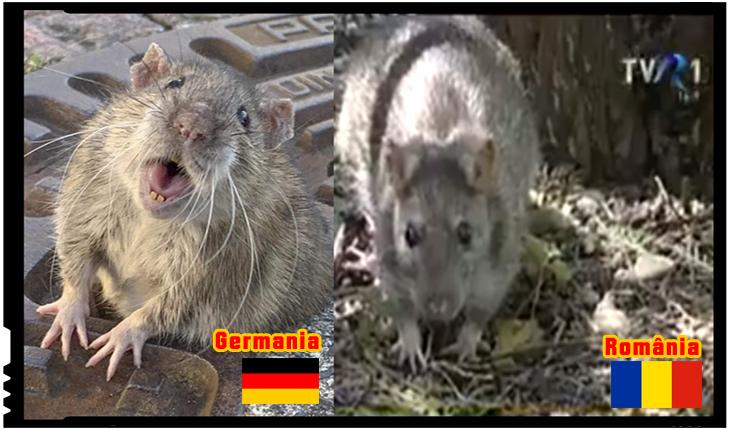"""Impresionat de mobilizarea germanilor pentru salvarea unui şobolan, un cetățean din Ferentari: """"Veniți mă să-i luați și pe ai noștri!"""", Foto: youtube"""