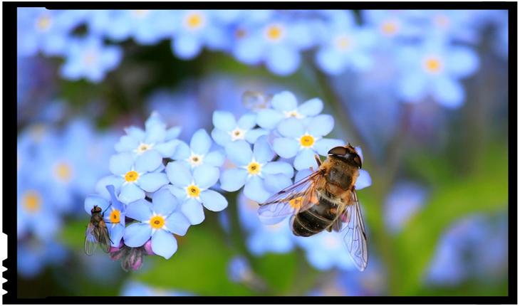 De ce avem nevoie de albine pentru un viitor cu alimentație sănătoasă