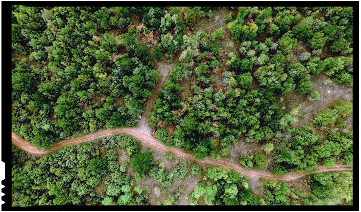 Republica Moldova se orientează spre un sistem îmbunătățit de planificare și monitorizare a resurselor forestiere, Foto: FAO