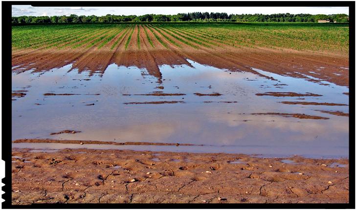 """FAO: """"Agricultura este foarte vulnerabilă la fenomene meteorologice extreme și dezastre naturale"""""""