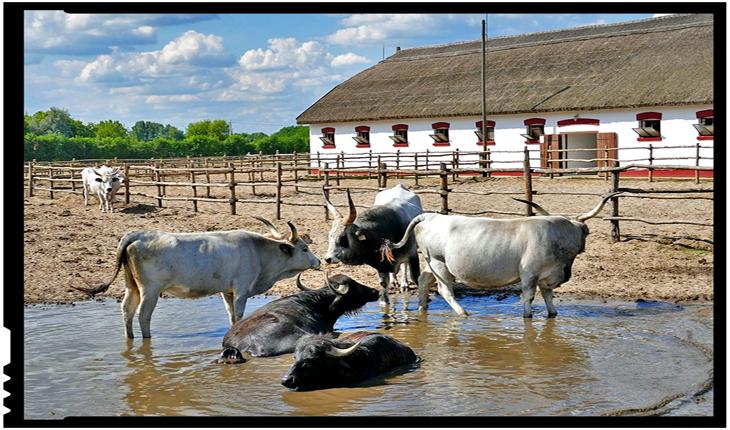 Guvernul Ungariei acordă burse de studiu în agricultură tinerilor din Republica Moldova?