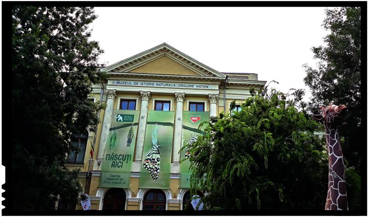 """MuzeuMuzeul Național de Istorie Naturală """"Grigore Antipa""""l Național de Istorie Naturală """"Grigore Antipa"""""""