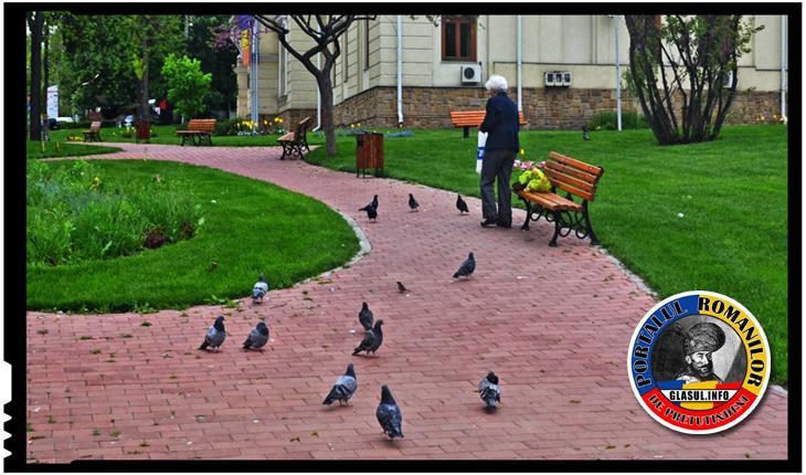 Probleme pentru cei care obișnuiesc să hrănească porumbeii pe domeniul public