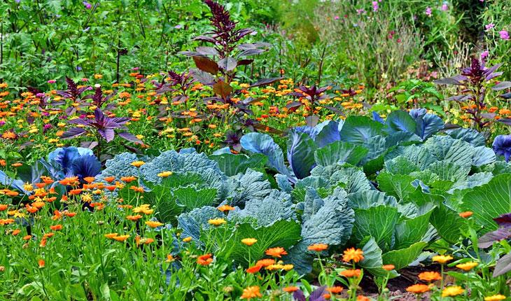 Sănătatea plantelor este vitală pentru sănătatea umană: factori de decizie din țările Europei și Asiei Centrale se reunesc pentru a îmbunătăți sănătatea plantelor