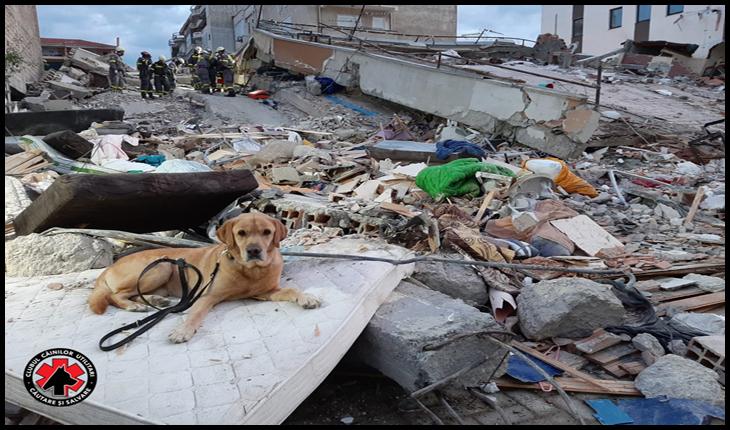Câinii salvatori din România caută victimele cutremurului din Albania