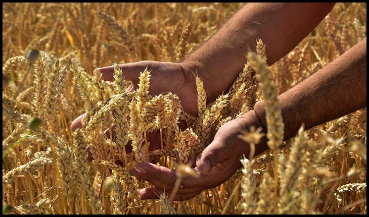 Cotațiile internaționale pentru zahăr și cerealele de consum curent au crescut semnificativ, potrivit FAO