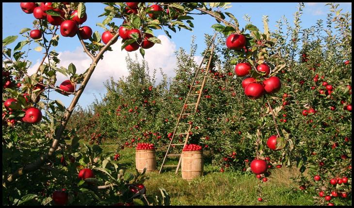 """Directorul Asociației """"Moldova Fruct"""": """"România a importat 12 mii de tone de mere, ceea ce ne bucură foarte mult"""""""