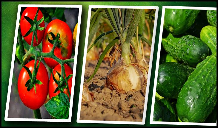 Sălbăticia antiromânească a P(n)DLeprelor este strigătoare la cer: cum să distrugi semințele românești!?