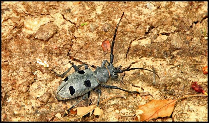 Comisia Europeană refuză dezvoltarea României, pe care și-o dorește transformată într-o crescătorie de gândaci?