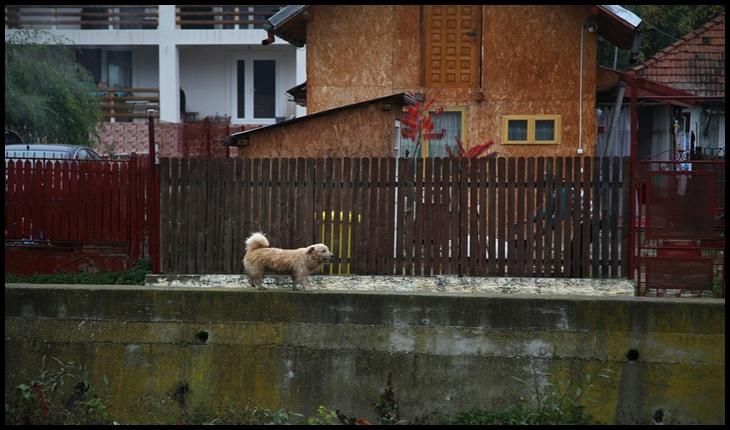 După ce au furat, ucis și mâncat un câine la Gilău, o asociație clujeană solicită expulzarea imigranților vietnamezi care refuză să respecte legile din România