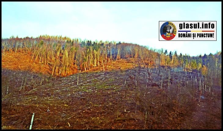 """Protest la Târgu Mureș pe 10 martie, """"Împotriva tăierii pădurilor și împușcării urșilor"""""""