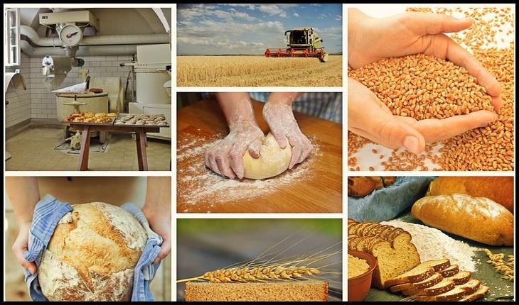 Exerciţiu de propagandă? Interzicerea exportului de cereale se referă doar către țările din afara UE!?