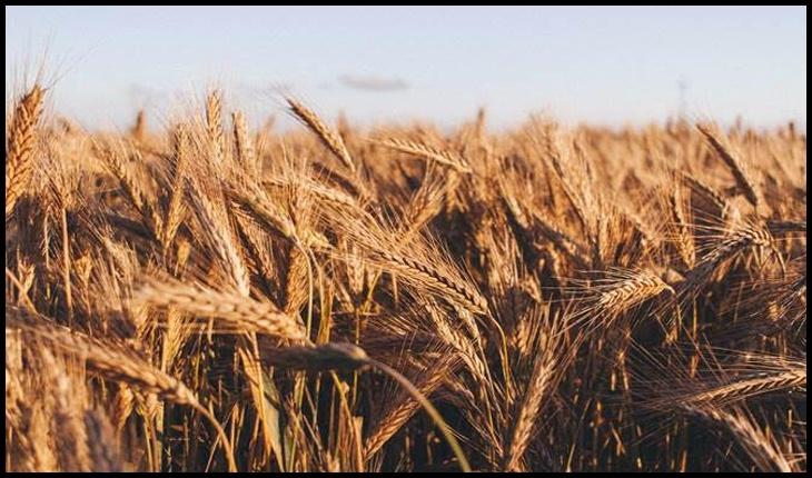 Recomandările FAO privind plantarea și recoltarea în timpul pandemiei COVID-19, Foto: FAO